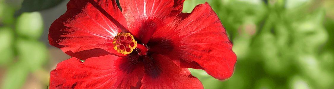 Jardí Botànic Marimurtra | Fundació Carl Faust
