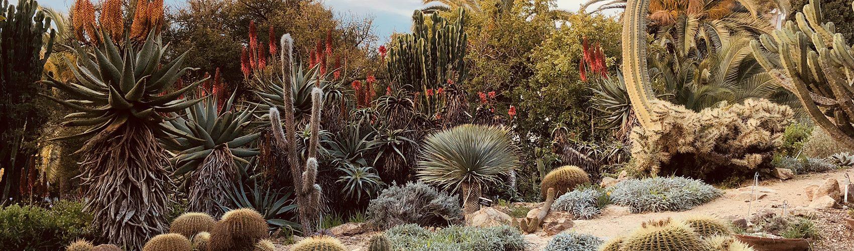 Cactus Jardí Botànic Marimurtra Costa Brava