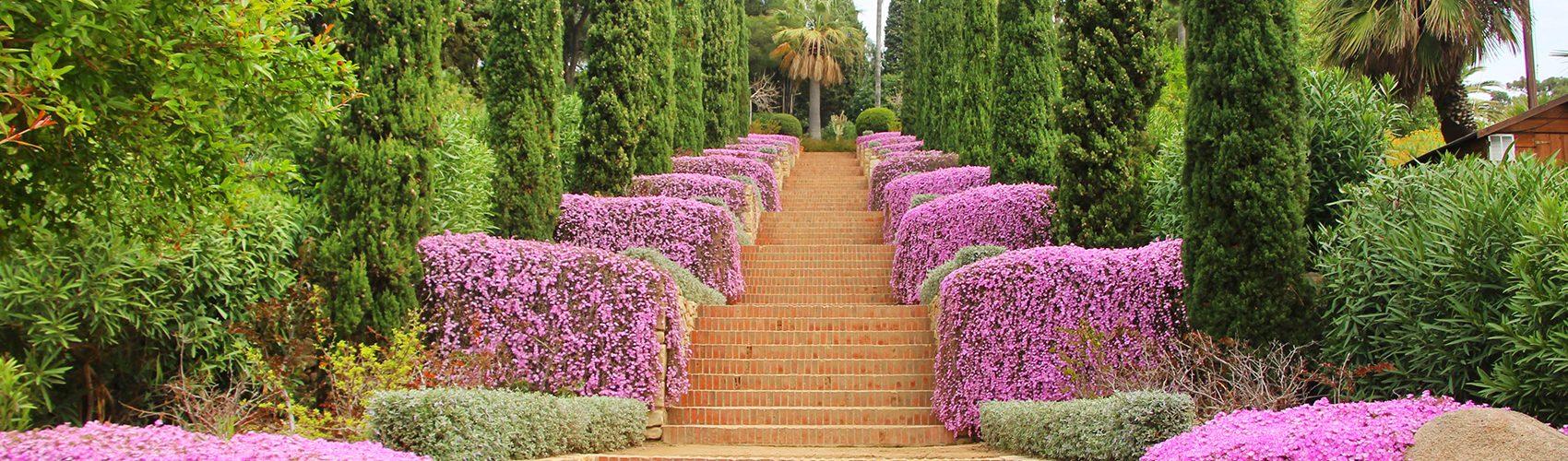 Escales Epicur Marimurtra Drossanthemum floribundum
